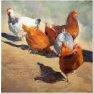 Les poules [Huile - 40 x 40]