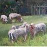 Etude de moutons [Huile - 30 x 40]