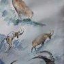 Bouquetins [Croquis aquarelle - 30 x 20]