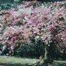 Le printemps - Cerisier-fleurs [Huile - 46 x 61]