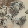 Mérinos [Fusain et acrylique sur toile]